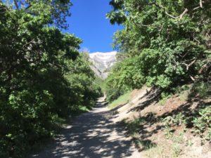 Battle Creek Falls - Trail View